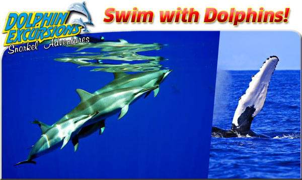 Oahu :: Swim with Dolphins